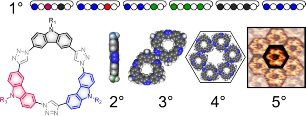Sequence-defined Macrocycles for Understanding and Controlling the Build-up of Hierarchical Order in Self-assembled 2D Arrays